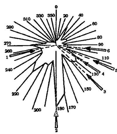 Copaci culcaţi la pământ co o dispunere radială