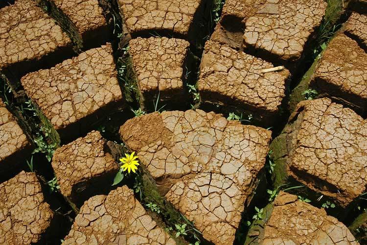 Dispozitive orgonice: Determinarea fenomenelor climatice (2)
